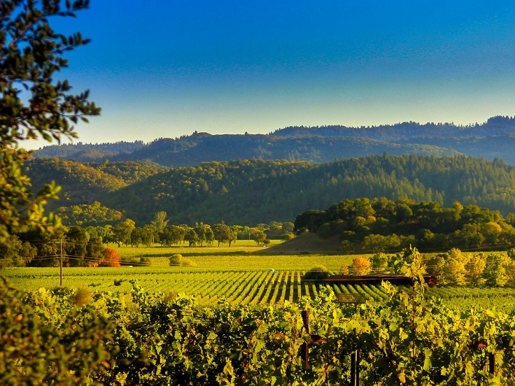 image is showing valley of napa vineyards