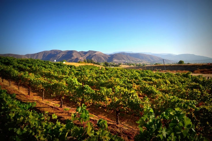 image is showing valley of Temecula vineyards
